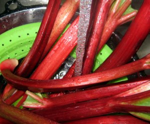 washing rhubarb