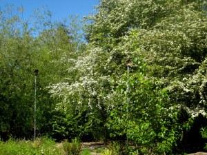 white center heights park, white center, seattle, wa, birdfeeders