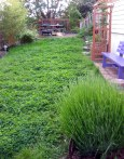 long eco grass and praire lawn + clover