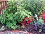 hydrangea, spruce, azalea & cairn