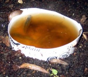 slugs seattle beer traps