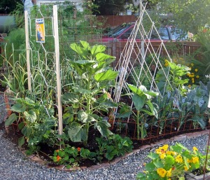 West Seattle Edible Garden Tour
