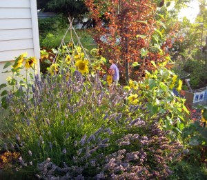 august mid month meanderings seattle garden