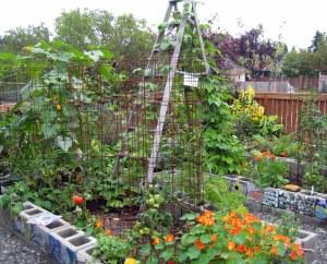 september mid month meanderings garden seattle