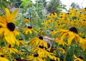 september mid month meanderings seattle garden