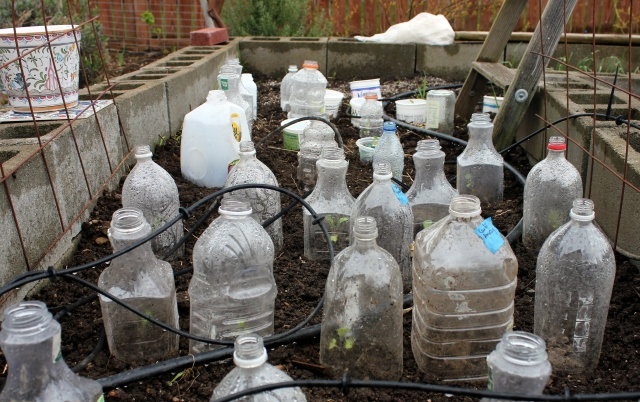 grow and resist april mid month meanderings recycled plastic bottle cloches