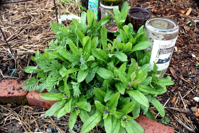 grow and resist april mid month meanderings perennials and bottle edging