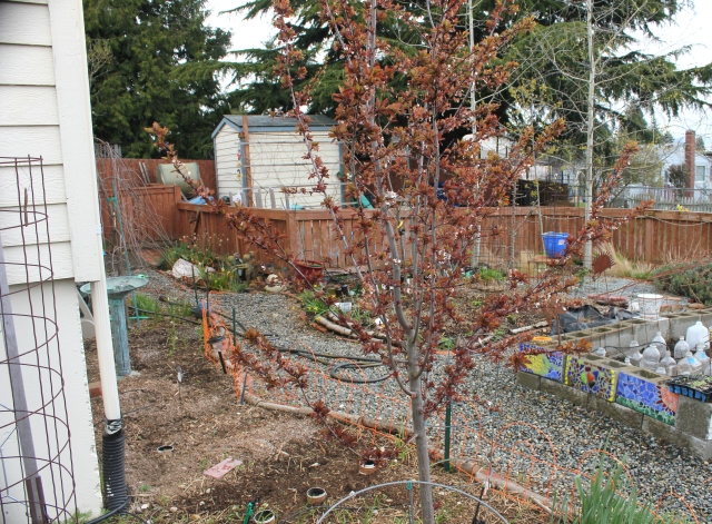 grow and resist mid month meanderings plum and overview