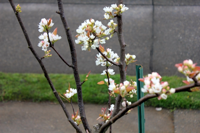 grow and resist mid month meanderings apple blossom