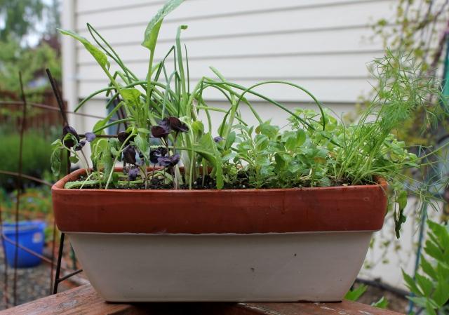 grow and resist herb garden
