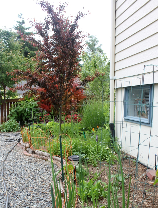grow and resist june mid month meanderings garden