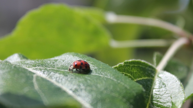 grow and resist june mid month meanderings ladybug