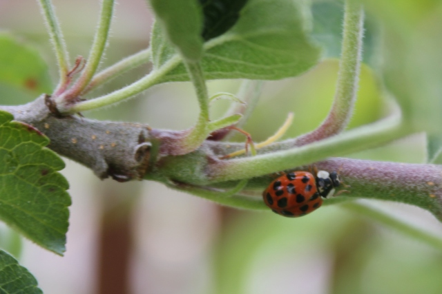 grow and resist june mid month meanderings ladybug