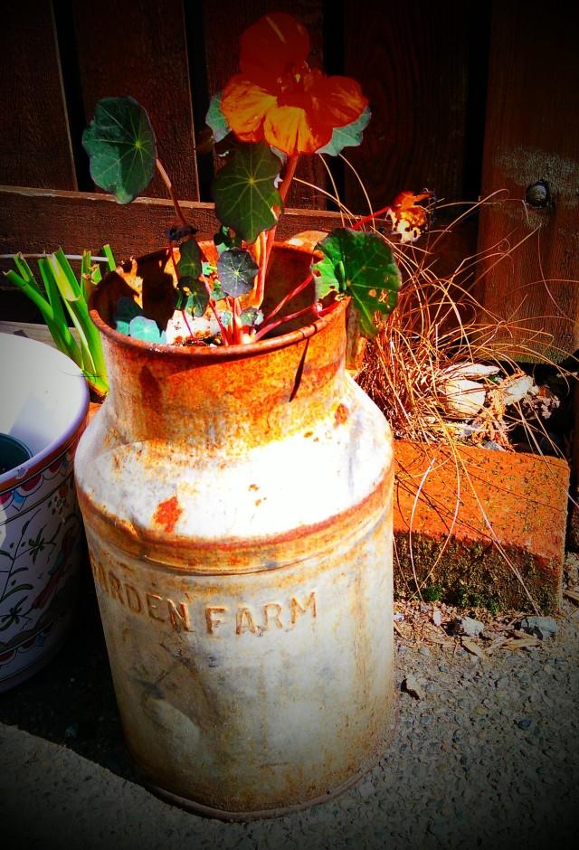 grow and resist july mid month meanderings nasturiums