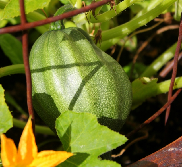 grow and resist mid month meanderings september winter squash