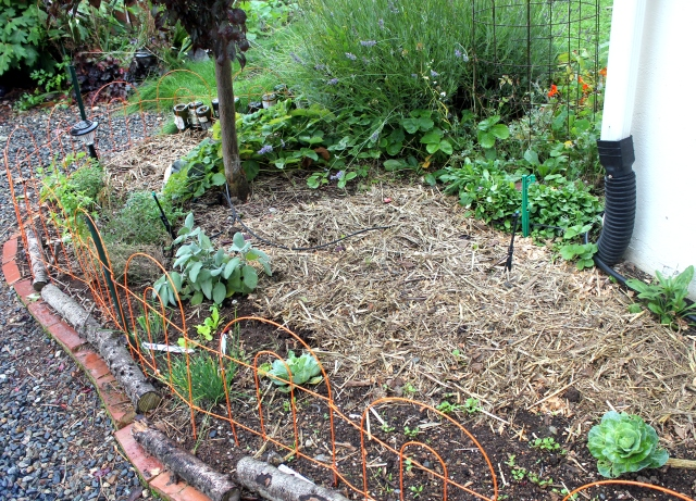 grow and resist october mid month meanderings straw mulched garlic bed