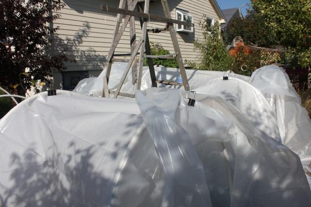 grow and resist october mid month meanderings hoop houses