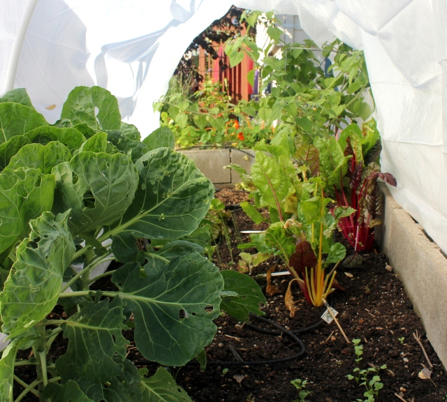 grow and resist mid month meanderings in the hoop house