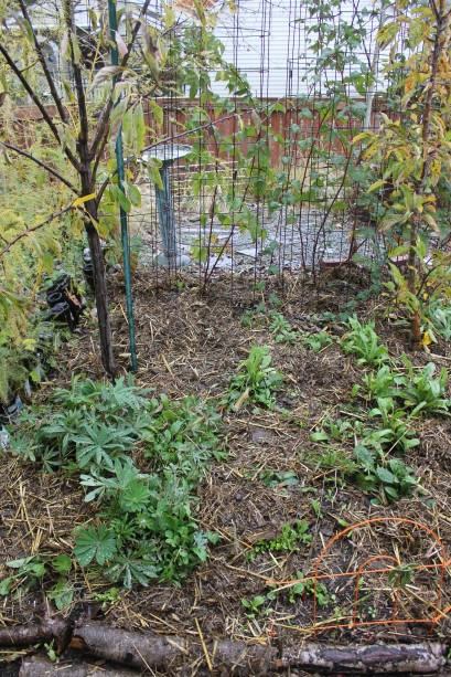 grow and resist november mid month meanderings