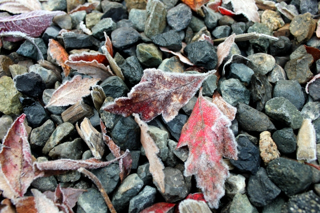 december mid month meanderings grow and resist frost