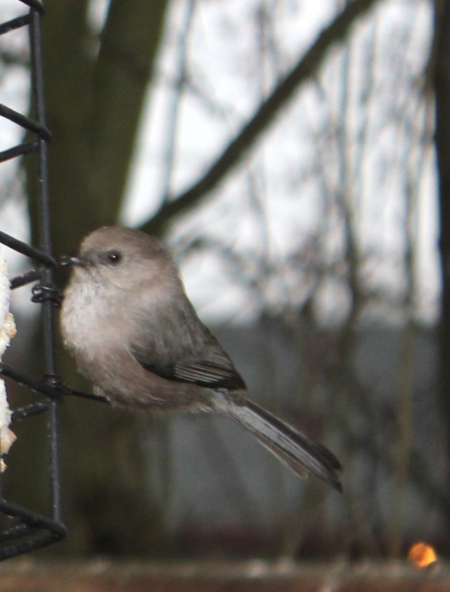 december mid month meanderings grow and resist bushtit