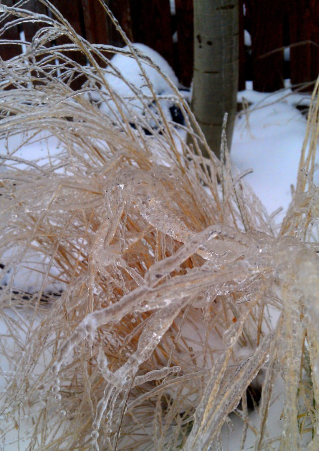 grow and resist snow and ice grasses