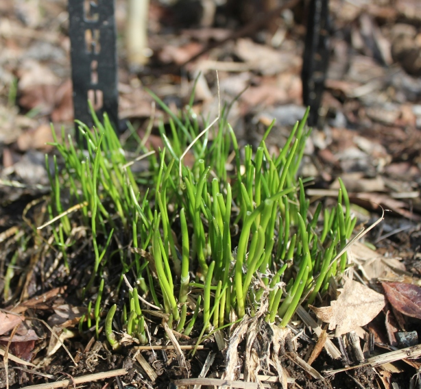 grow and resist february 2012 mid month meanderings