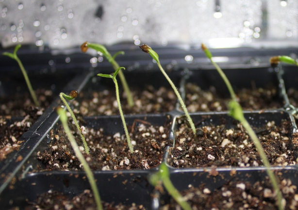 grow and resist february mid month meanderings seed starting