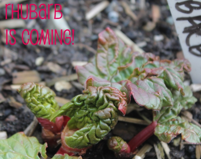 grow and resist mid month meanderings march rhubarb