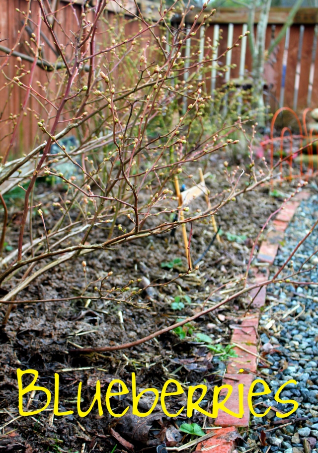 grow and resist march mid month meanderings blueberries