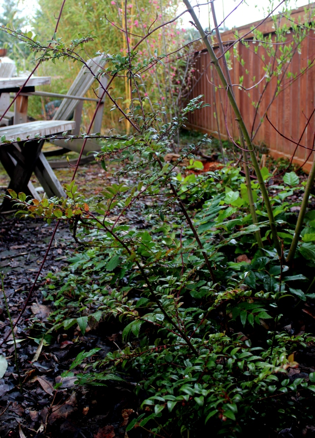 grow and resist mid month meanderings march native plants early bloom