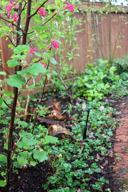 grow and resist mid month meanderings april native plant garden