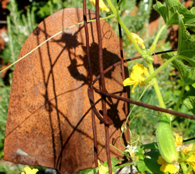grow and resist using concrete wire mesh in the garden trellis vertical gardening