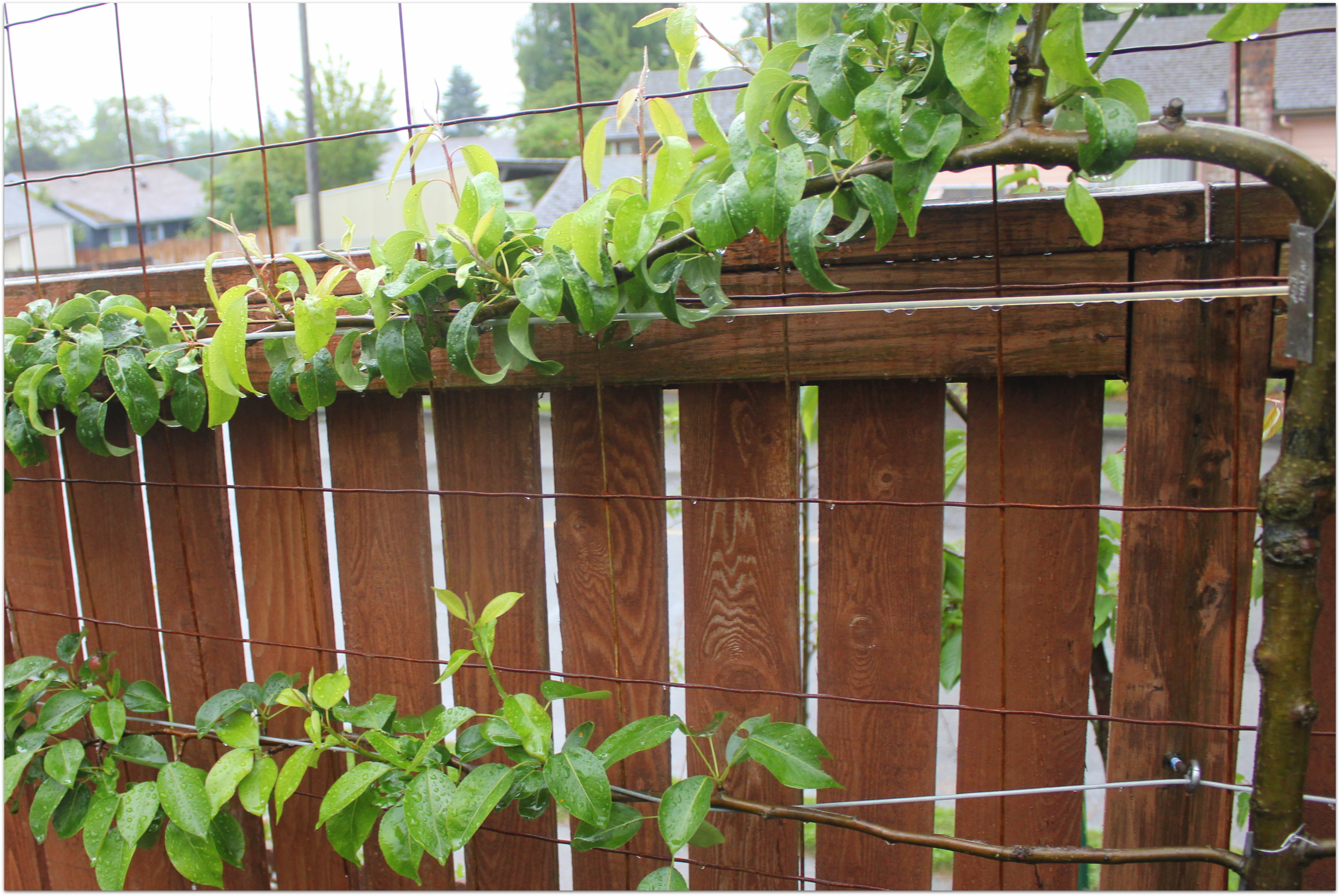 Vertical Gardening with Concrete Wire Mesh | Grow & Resist