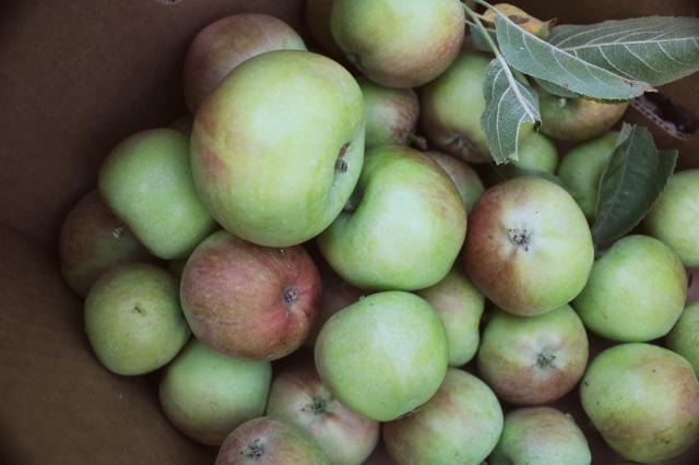 september 2012 mid month meanderings grow and resist apples