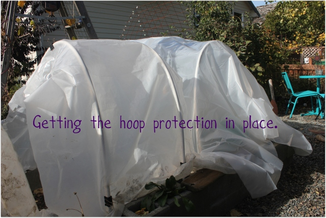 grow and resist october 2012 mid month meanderings hoop house