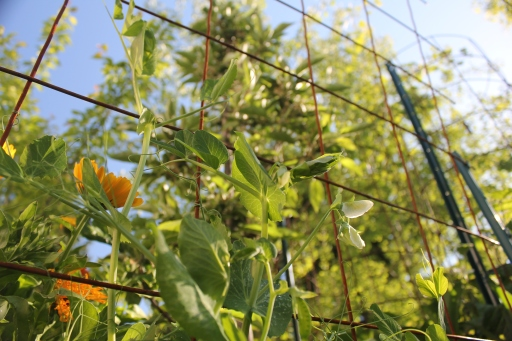 grow and resist vertical gardening with concrete wire mesh