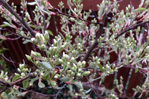 grow and resist april buds, blooms, and new growth